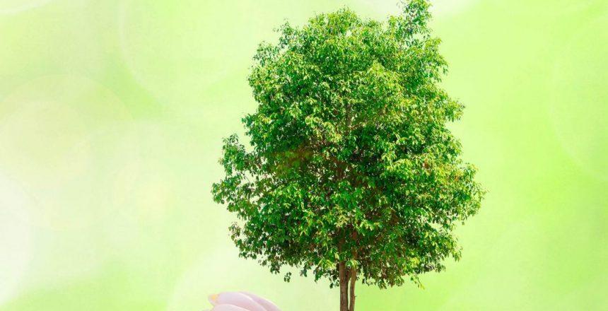 GC-ecologico-1080x675